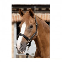 Premier Equine Halfter Plain Padded Horse Head Collar