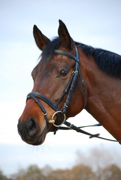 bb snaffle with swedish combined noseband