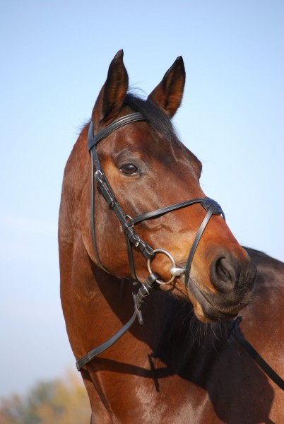 bb snaffle with mexican noseband