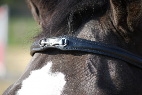 bb cambered browband with bit