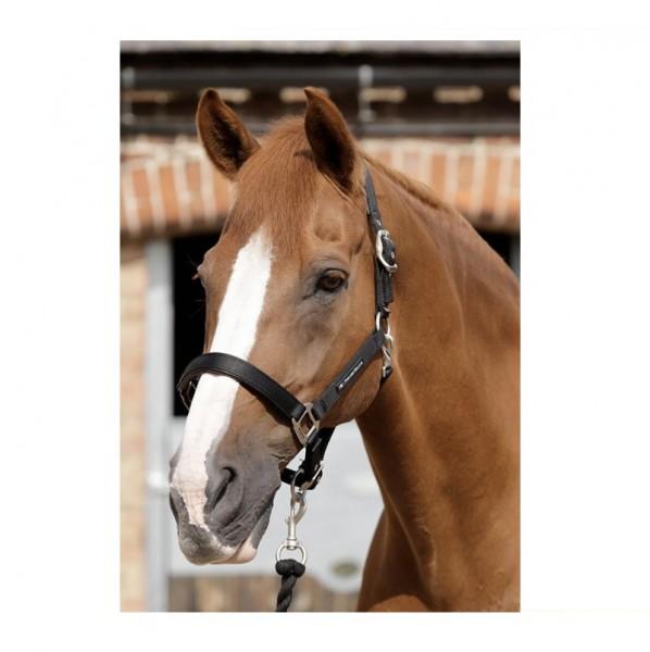 Premier Equine Halter Plain Padded Horse Head Collar